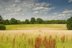 Top Farm camp site